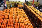 تذکر ۱۵ نماینده به وزرای «صمت» و کشاورزی درباره قیمت میوه