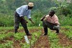 حمایت از خروجی صنعت کشاورزی در دل دانشگاهها