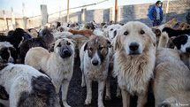 آیا حمایت از حیوانات به عمر مجلس دهم قد میدهد؟