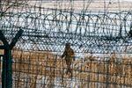 کره شمالی دور خود حصار کشید