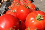 گوجه فرنگی هر کیلو ۱۵ هزار تومان شد