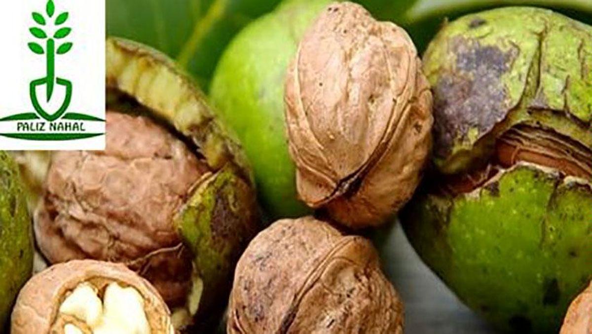 شناخت انواع نهال میوه ؛ لازمهی موفقیت در باغداری