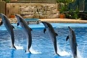 پارک دلفین های کیش از جاذبه های کیش