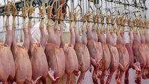 دعوای دولتیها باعث گرانی مرغ شد