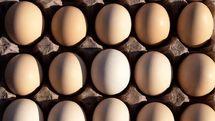 قیمت مصوب هرشانه تخممرغ ۳۰ تا ۳۲ هزار تومان