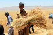 مجلس تخلف دولت در نرخ گندم را پیگیری میکند