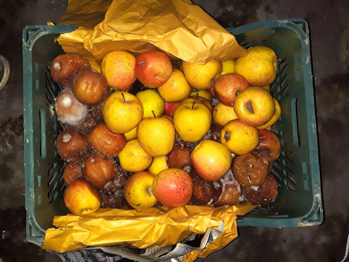 مقصر اصلی فاسد شدن دهها هزار تن سیب و مرکبات